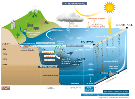 Oxygen distribution in the ocean